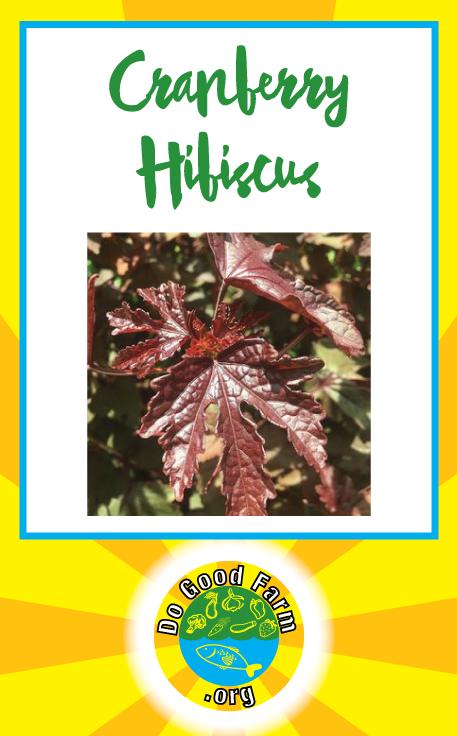 Cranberry Hibiscus Do Good Farm